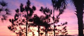Ave Maria Sunset 2